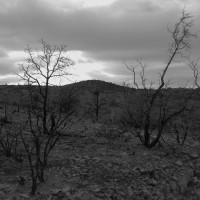 The Beauty in Bleak (Exquisite Gloom Redux)
